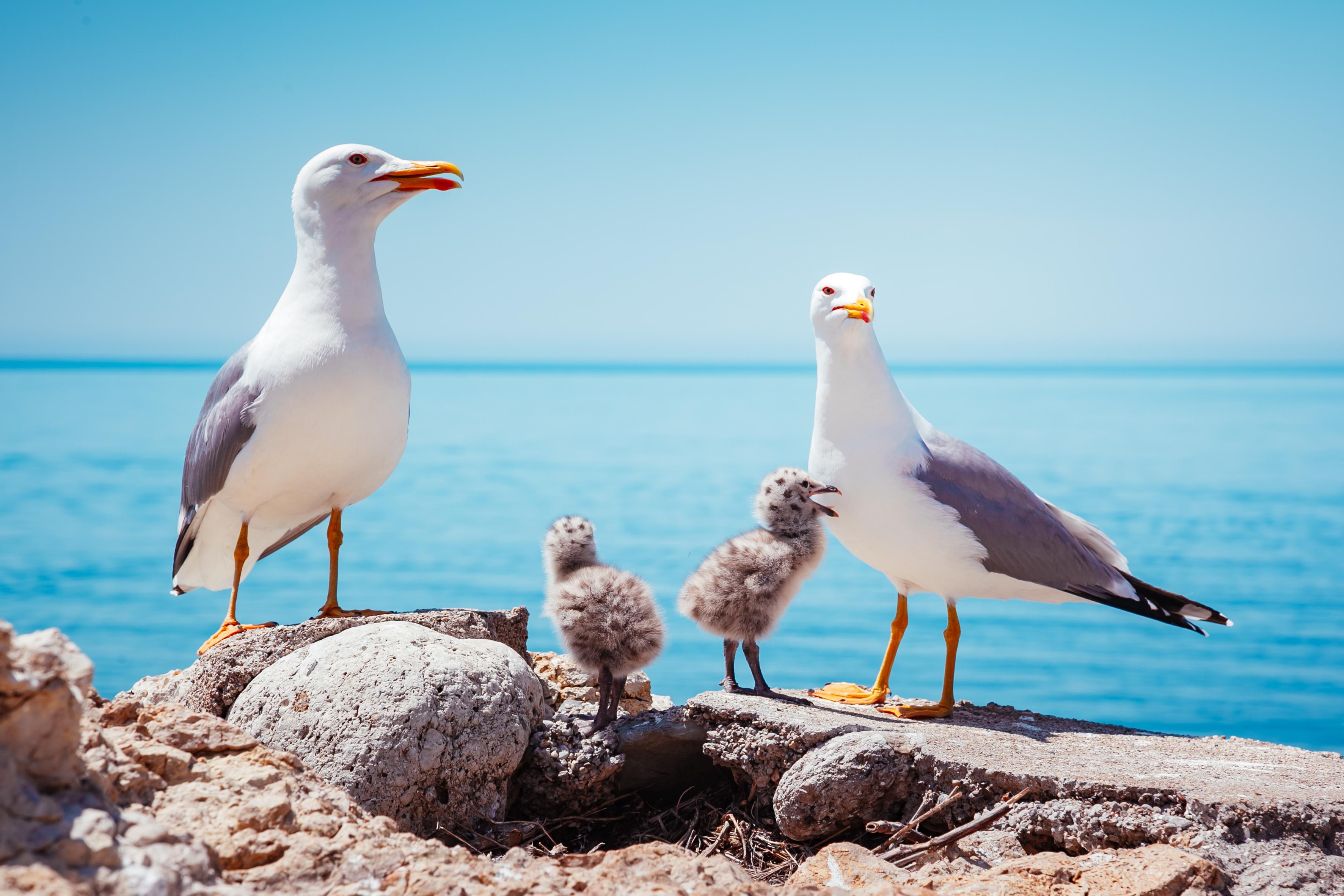 Mediation bij (stief)ouderschap